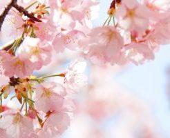 花見と言えば『桜』の意味は?サクラ前線の謎にも迫ってみた!