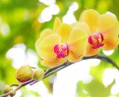 長寿祝いの花はいつまでに届けたらいい?おすすめの花やNGな花はある?