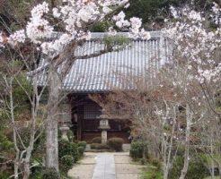 普賢大御堂観音寺の菜の花畑と桜のコラボで日本の春を満喫!