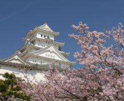 姫路城の桜の開花と見ごろ時期はいつ?食事はどこでする?混雑状況は?