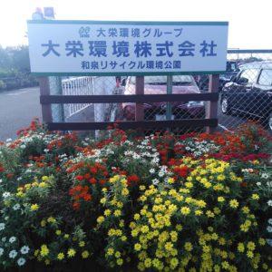 和泉リサイクル環境公園のコスモス畑を見にいってきました♪