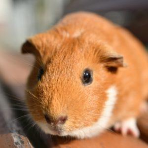 鼠の名前の語源と子年生まれの性格は?ねずみモチーフの人気キャラクターも調べてみた!