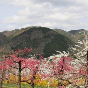 春や桜にまつわる故事 諺 慣用句 俳句を調べてみた。